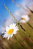 De zomerkleuren Stock Foto