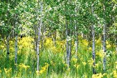 De zomerkleuren in vegetatie royalty-vrije stock fotografie