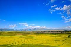 De zomerlandbouwgrond in Tianshui, Gansu-Provincie stock fotografie