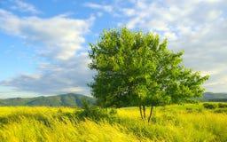 De zomerlandschap Stock Fotografie