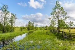 De ZOMERlandschap Stock Foto's