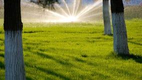 De ZOMERlandschap Automatisch het water geven systeem voor installaties en gazon Watersproeier die gras in park overgieten stock footage