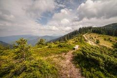 De zomerlandschap in bergen en de donkerblauwe hemel met wolken Royalty-vrije Stock Afbeelding