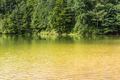 De zomerlandschap bij het meer en bos met spiegelbezinning Stock Foto