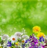 De ZOMERlandschap Bloemen Royalty-vrije Stock Afbeelding