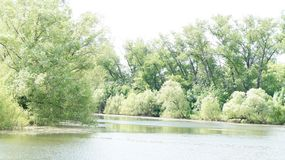 De zomerlandschap, bomen op de kust van de vijver Stock Afbeelding