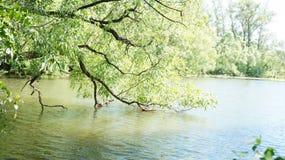 De zomerlandschap, bomen op de kust van de vijver Stock Foto