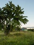 De ZOMERlandschap Boom en groene weide Land stock fotografie