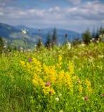 De zomerlandschap in Ceahlau-Bergen Royalty-vrije Stock Afbeelding
