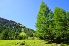 De zomerlandschap in de Alpen van Zwitserland Stock Fotografie