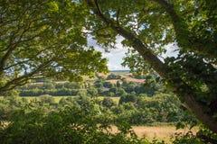 De zomerlandschap door Bomen wordt ontworpen die Royalty-vrije Stock Afbeelding