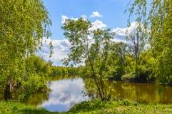 De zomerlandschap door de rivier Mukhavets Stock Fotografie