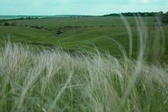 De zomerlandschap, gebied van pluimgras onder de blauwe hemel Royalty-vrije Stock Foto