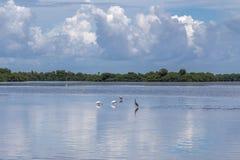 De zomerlandschap, J N Ding Darling National Wildlife-toevluchtsoord royalty-vrije stock foto's