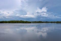 De zomerlandschap, J N Ding Darling National Wildlife-toevluchtsoord stock afbeelding