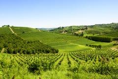 De zomerlandschap in Langhe (Italië) Royalty-vrije Stock Afbeelding
