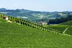 De zomerlandschap in Langhe (Italië) Stock Afbeelding