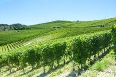 De zomerlandschap in Langhe (Italië) Stock Fotografie