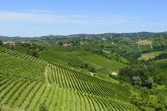 De zomerlandschap in Langhe (Italië) Stock Foto's