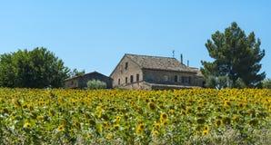 De zomerlandschap in Marsen (Italië) Royalty-vrije Stock Fotografie