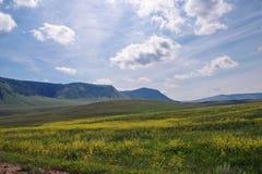 De zomerlandschap met bloeiende gele bloemen van een weide op de achtergrond van beboste bergen Stock Afbeelding