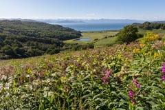 De zomerlandschap met bloemen, bergen en overzees Stock Afbeelding