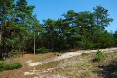 De zomerlandschap met bomen stock afbeeldingen