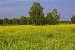 De zomerlandschap met bomen Stock Afbeelding