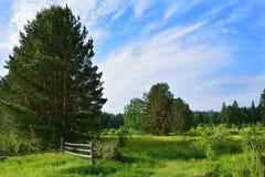De zomerlandschap met boom, houten omheining en tot bloei komende bloemen van een dogrose Stock Fotografie