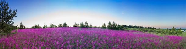 De zomerlandschap met de tot bloei komende weide, zonsopgang Royalty-vrije Stock Foto