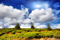 De zomerlandschap met drie bomen en blauwe hemel en zon Stock Afbeeldingen