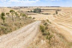 De zomerlandschap met een landweg op een de zomerdag tussen Hornillos del Camino en Hontanas, Burgos, Spanje Royalty-vrije Stock Fotografie