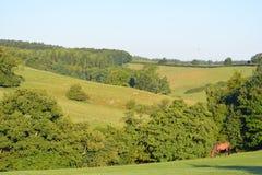 De zomerlandschap met een paard, North Yorkshire, het UK stock fotografie