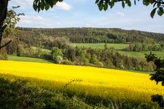 De zomerlandschap met Geel Verkrachtingsgebied in Tsjechisch Platteland royalty-vrije stock foto
