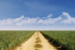 De zomerlandschap met groen gras en blauwe hemel Royalty-vrije Stock Foto's