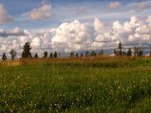 De zomerlandschap met groen gras, wolken Stock Foto's