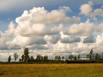 De zomerlandschap met groen gras, wolken Royalty-vrije Stock Foto's