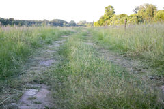 De zomerlandschap met groene gras en weg Stock Afbeeldingen