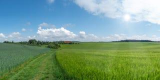 De zomerlandschap met groene korrelgebieden stock afbeelding