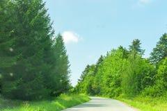 De zomerlandschap met het winden van weg en bos, zachte nadruk royalty-vrije stock afbeeldingen