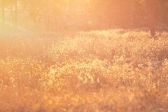 De zomerlandschap met lensgloed Royalty-vrije Stock Afbeeldingen