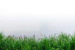De zomerlandschap met riet en moerasachtergrond royalty-vrije stock afbeeldingen