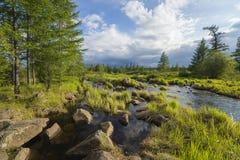 De zomerlandschap met rivier, bewolkte hemel, bos en gras en bloemen stock fotografie