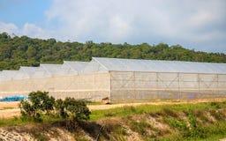 De zomerlandschap met serres Broeikas voor installaties en groenten de groei stock foto's