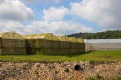 De zomerlandschap met serres Serre voor installaties en groenten de groei stock afbeelding