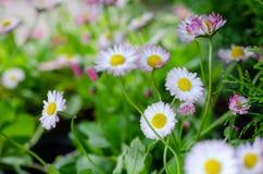 De zomerlandschap met witte bloemen stock afbeeldingen