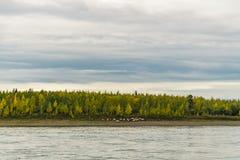 De zomerlandschap op de banken van de groene rivier bij zonsondergang, Rusland royalty-vrije stock foto