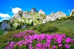 De zomerlandschap op berg Royalty-vrije Stock Afbeelding