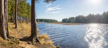 De zomerlandschap op de rivierbank met pijnboombos, Rusland, Ural royalty-vrije stock afbeeldingen