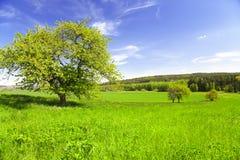 De zomerlandschap in Tsjechische Republiek Stock Afbeelding
